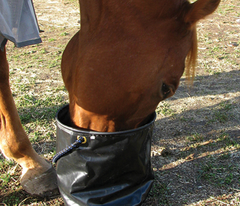trail_pack_collapsible_water_pail_cwp.jpg