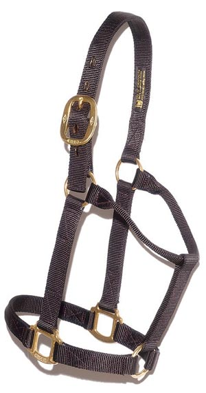 big_d_nylon_halter.jpg